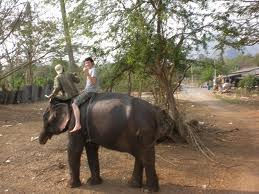 Person Riding an Elephant1
